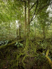 The spectacular threatened forests in logging coupe WR008A