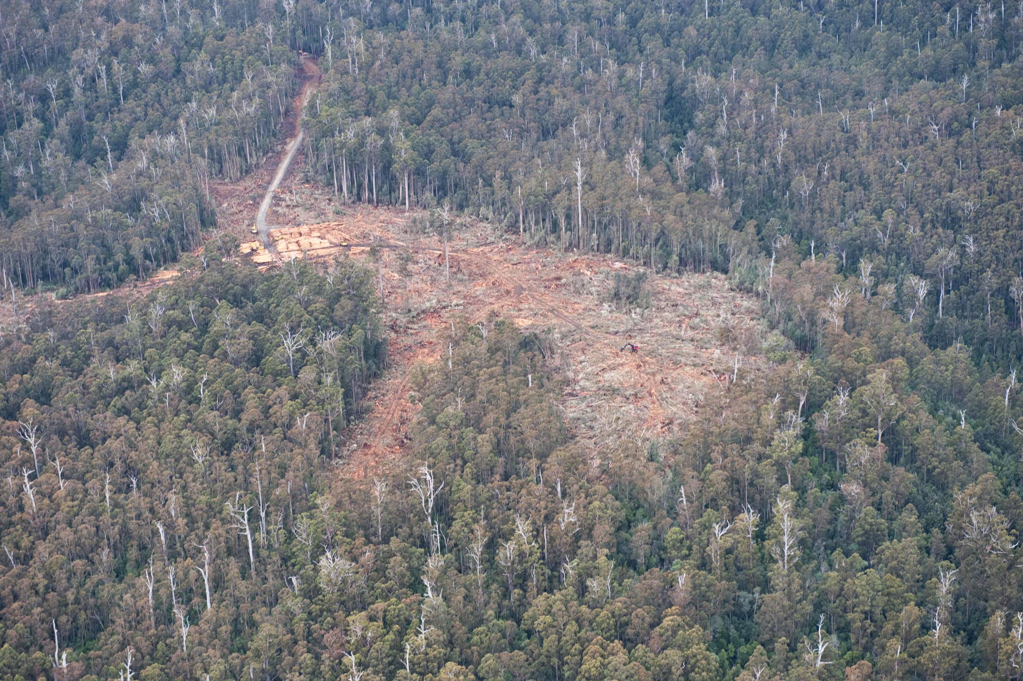 Hasil gambar untuk logged over area