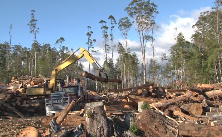Logging in World Heritage nominated forests in Butlers Gorge